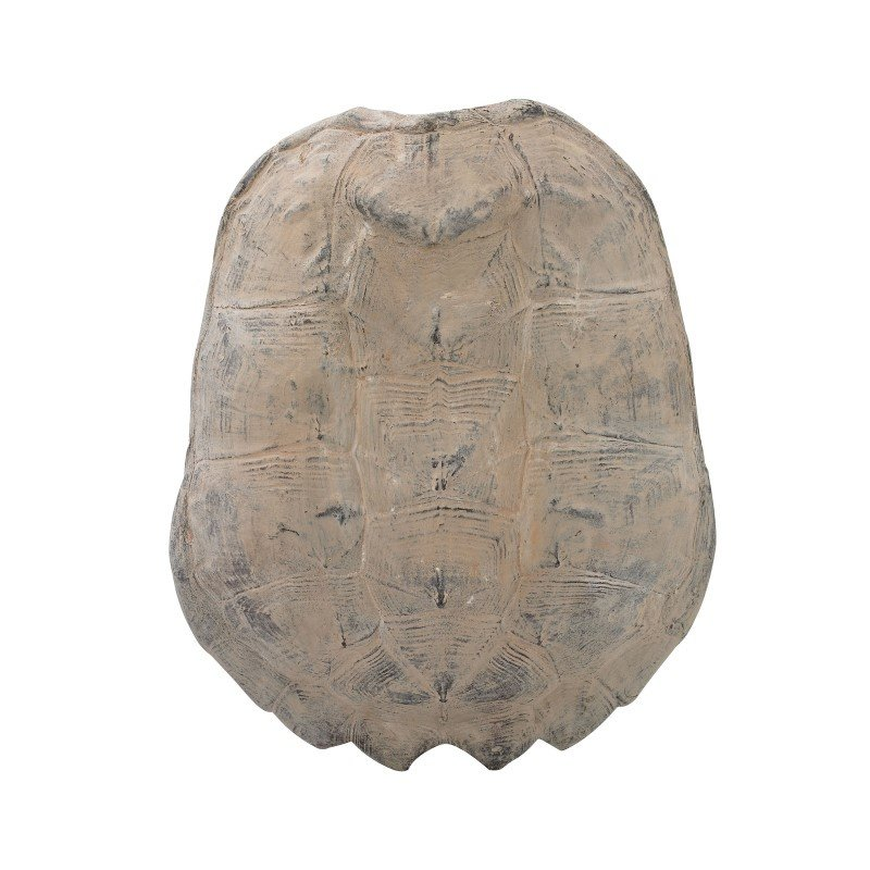 Guild Master Cretaceous Spiny Turtle Shell (2182-019)