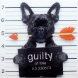 Moe's Home Collection Guilty French Bulldog (FX-1179-37)