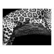 Moe's Home Collection Jaguar Wall Decor in Multi (FX-1216-37)