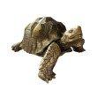 Moe's Home Collection Mock Turtle Sculpture (LA-1044-32)