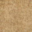"""Plutus Brands Tip Dyed Fox Faux Fur Luxury Throw 48""""W x 60""""L (PBEZ1786-4860-TC)"""